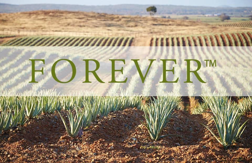 aloe forever plantation